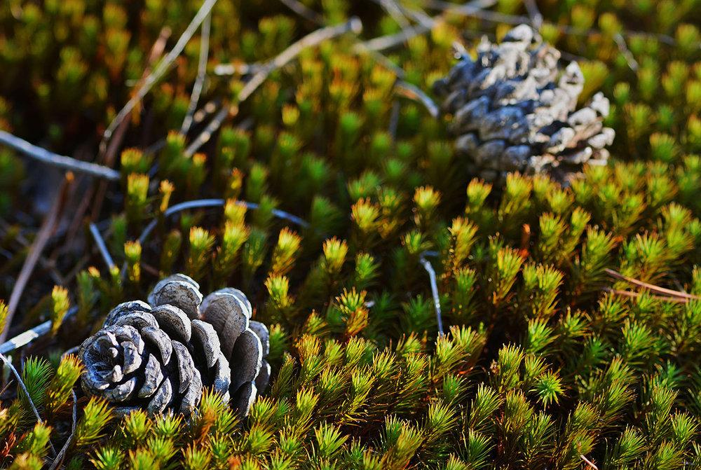Ground cover along the trail.  Dave Kraus/   krausgrafik.com