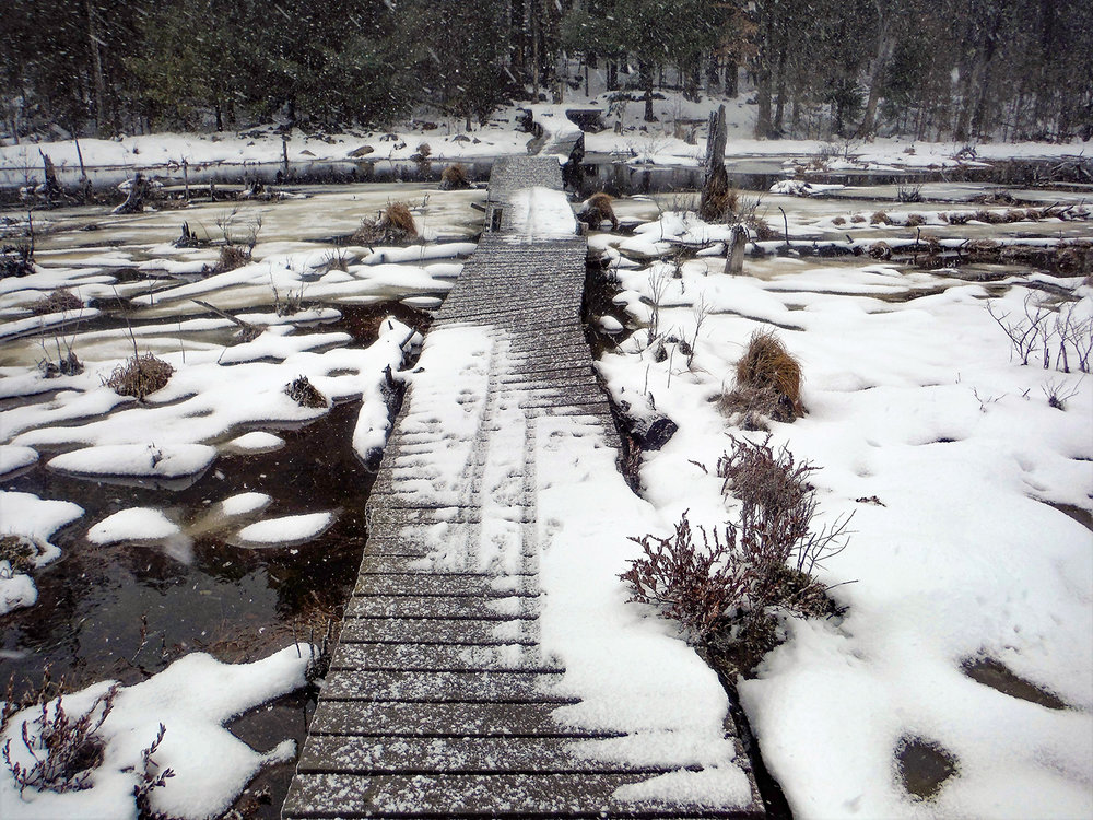 Early in the season it may be difficult to cross Dustin Swamp at the Dyken Pond Environmental Education Center.   Rich Macha