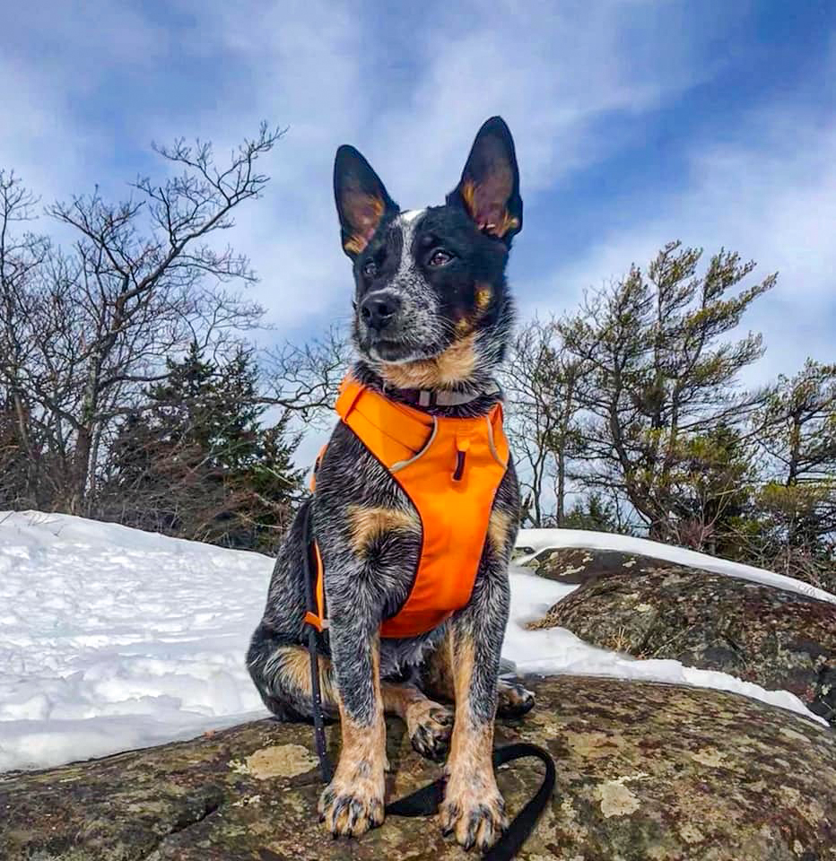 Zeke's first mountain adventure.