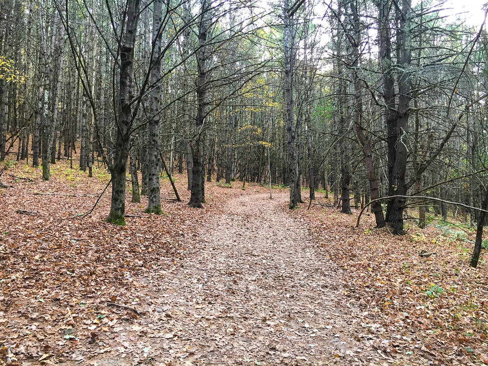 Up the aqua blue trail that's covered in leaves.  Tom O'Grady