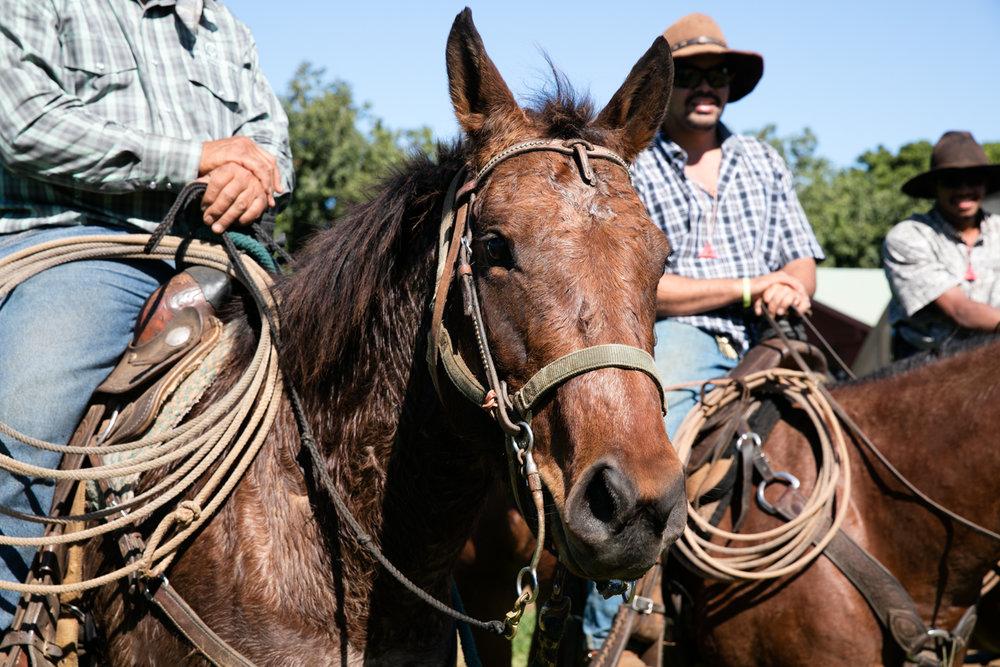 Hana-Ranch-733-mdxfave.jpg