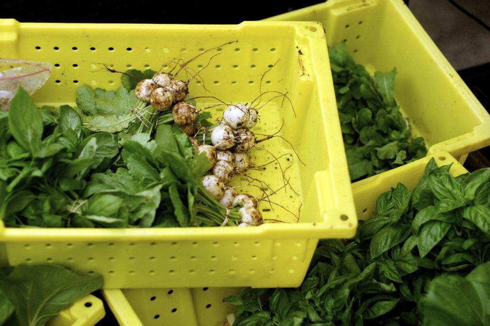 First-Veggies-1024x681.jpg