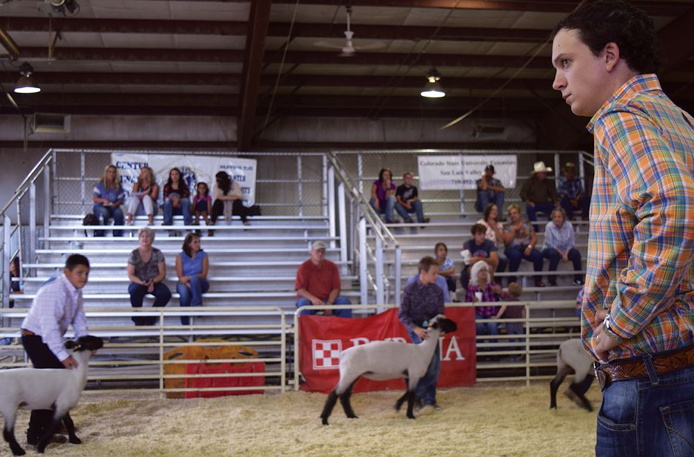 Livestock judge Travis Begley analyzes the sheep at the San Luis Valley Fair held at the Ski Hi Complex on Aug. 8, 2016. Begley ranked a total of 44 sheep in eight weight classes.