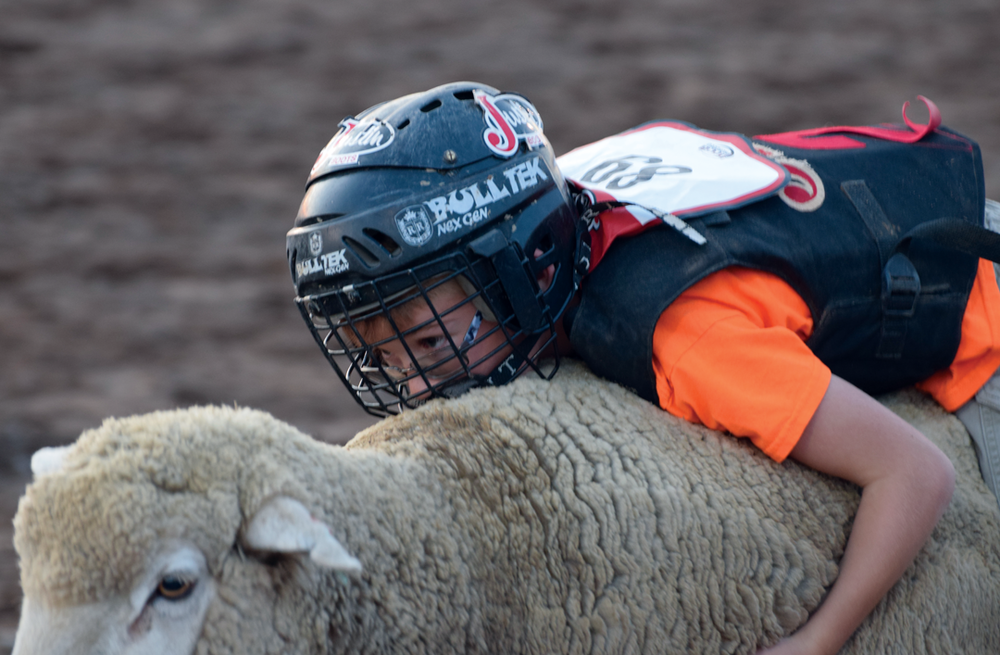 Seven-year-old Gavin Graber holds on tight as a rides a sheep for the 2017 Alamosa Round-Up mutton busting event at the Alamosa Fairgrounds on June 21, 2017. Graber tied for third with 90 points. Part of the portfolio that won first place for Class 6 in the Colorado Press Association Better Newspaper Contest in 2018.