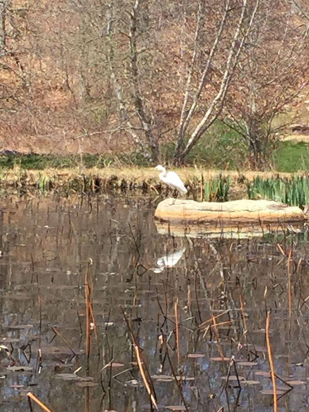 Crane on Rock Shadow.jpg