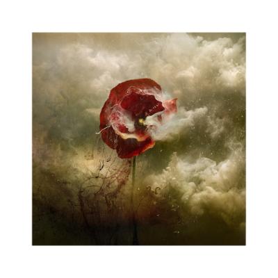 War Poppy 5, 2015