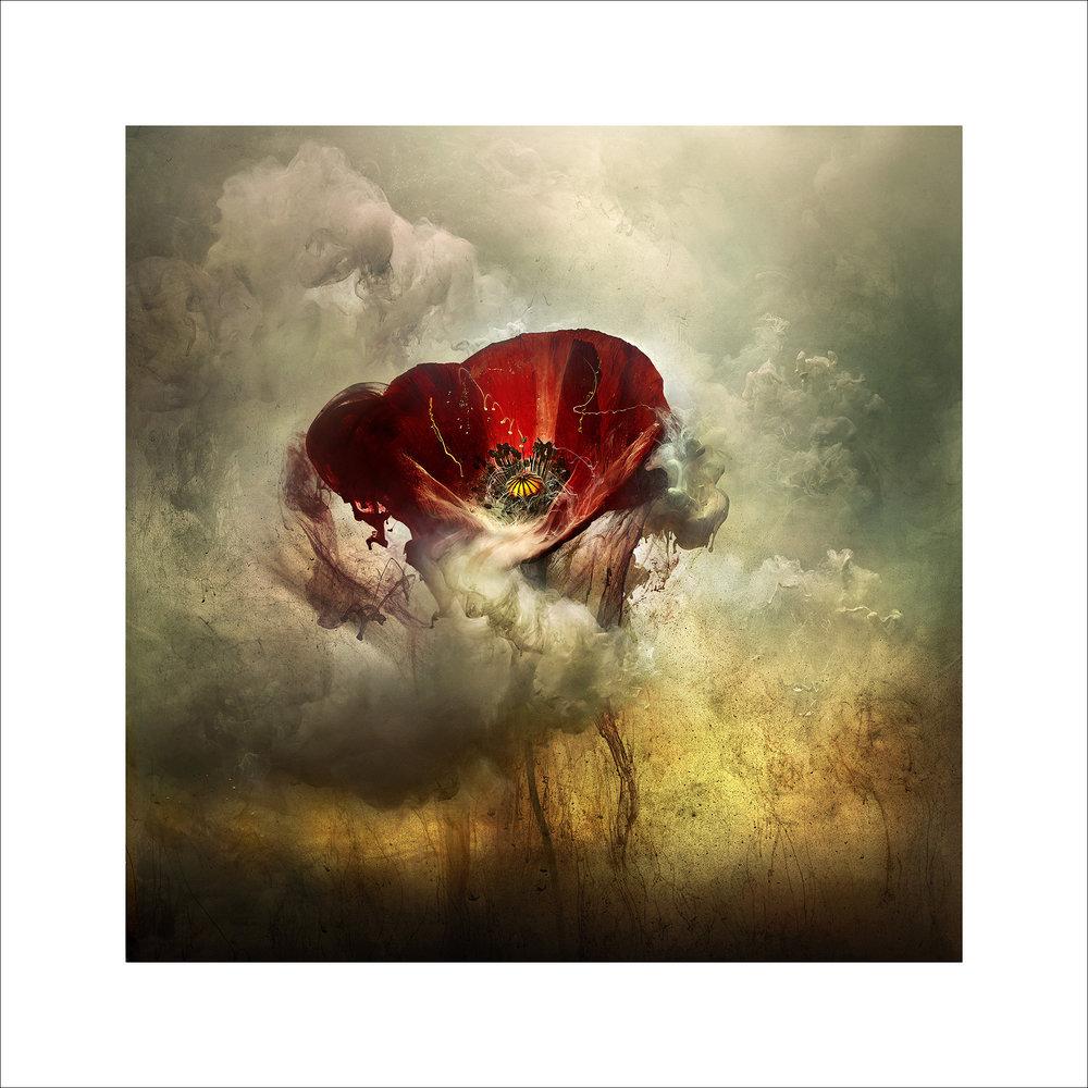 War Poppy 3, 2015