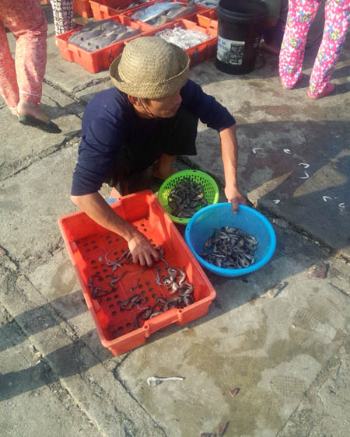 A fisher counts his seahorses at Qinlan Fishing Port, Wenchang, Hainan Province. Photo: Xiong Zhang/Project Seahorse