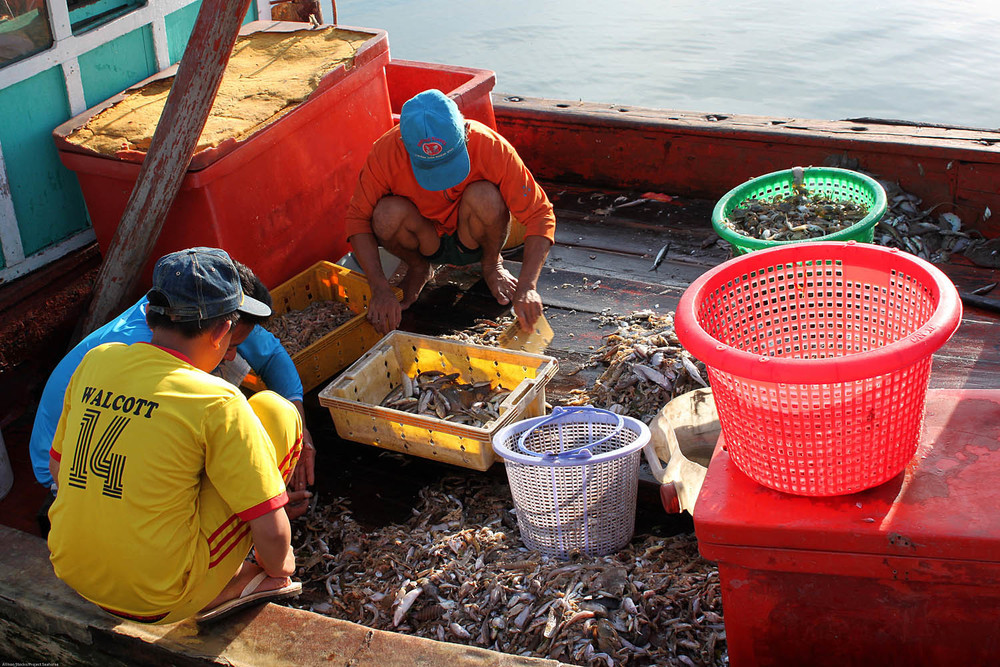 Trawl boats fished for just about anything – small fish, octopus, squid…  A. Stocks/Project Seahorse