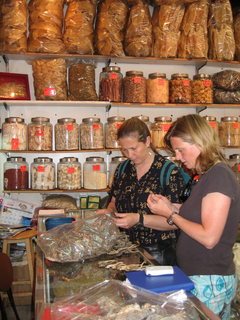 Dr. Vincent and Dr. Koldewey examining dried seahorse specimens.  Amanda Vincent/Project Seahorse