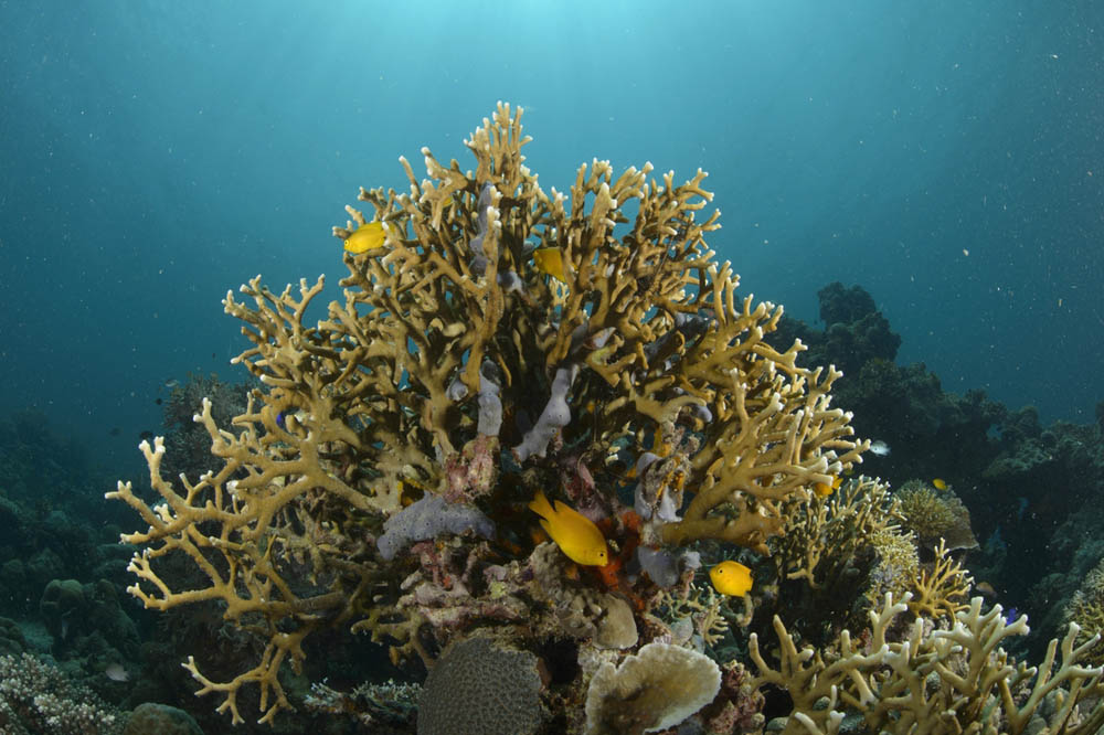 A sparsely populated reef on Danajon Bank in the central Philippines.  Luciano Candisani/iLCP