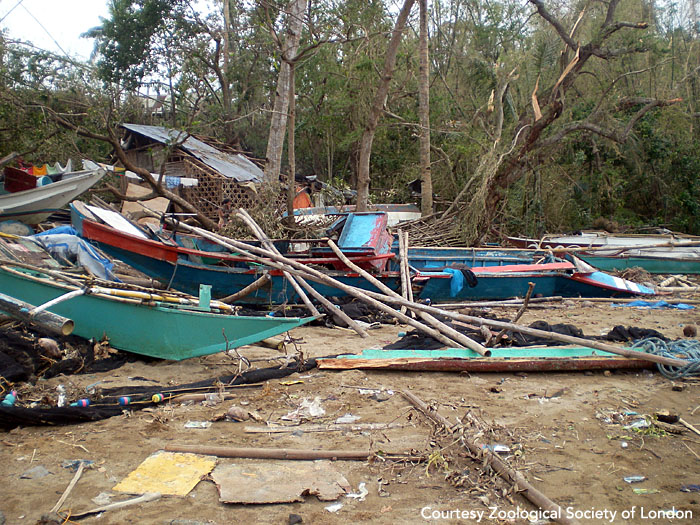 Fishing boats destroyed by Typhoon Haiyan (a.k.a. Yolanda). Panay, Philippines.  Photo courtesy of ZSL