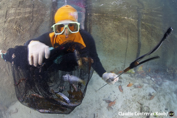 A fisher shows off his catch. Many fishers wear masks and gloves to protect against jellyfish stings.