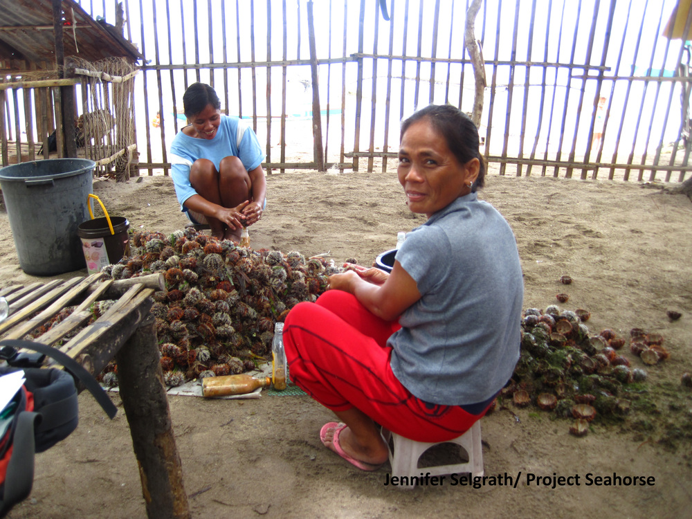 Women breaking apart sea urchins so the roe can be sold to market.