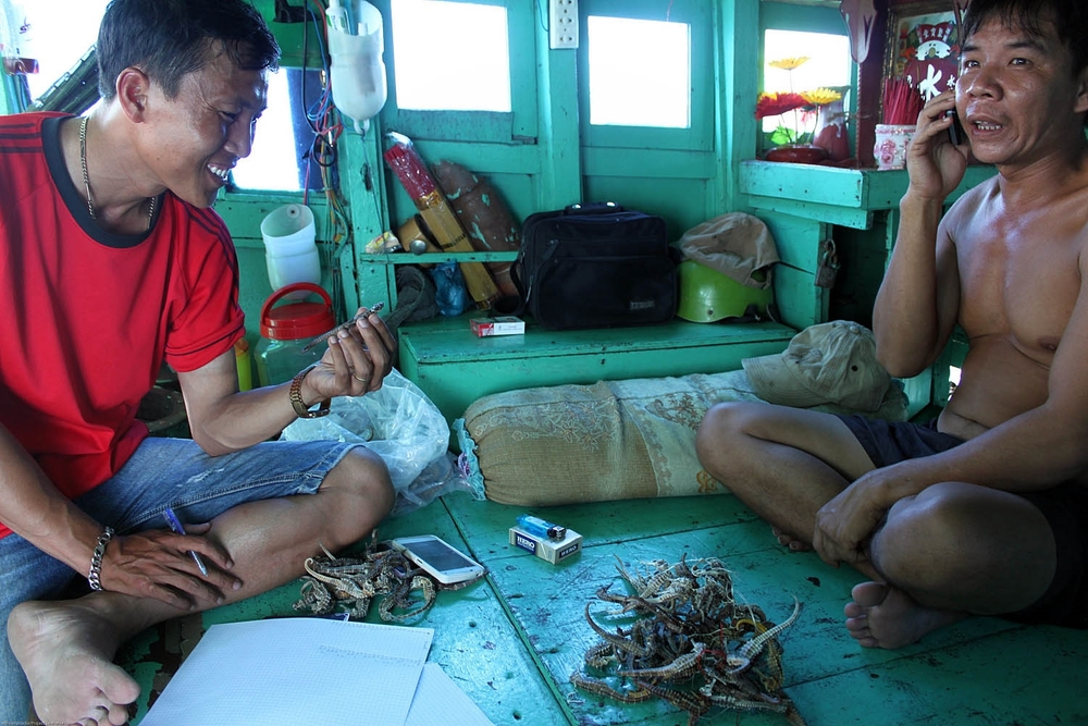 Of course, these boats would accidentally catch all sorts of marine species. When we investigated their catch and asked about seahorses, more often than not they'd have a stash of them somewhere. They'd be saved up and then sold to buyers on Phu Quoc. In this photo, my assistant An is checking out the catch of a large trawl boat that would spend up to two weeks at sea. They had over a hundred seahorses on board! A. Stocks/Project Seahorse