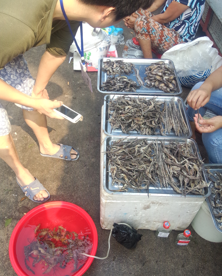 The first time I saw live seahorses …  on sale in a seafood market (at Xincun Town, Linshui, Hainan) !