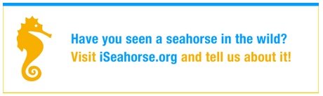 have you seen a seahorse in the wild banner..png