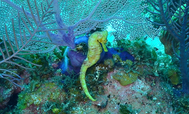 Photo by Alexa Elliott/Guylian Seahorses of the World