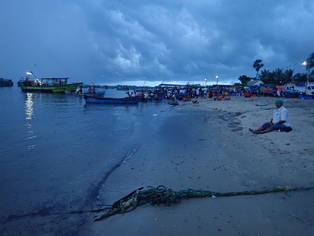 Trawl landing site at dawn, Mandapam North, India. Photo by Amanda Vincent/Project Seahorse.
