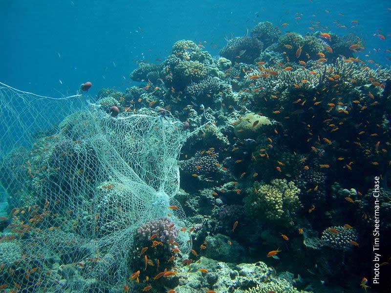 Fishing_Net_On_Reef_TimSheerman-Chase.jpg