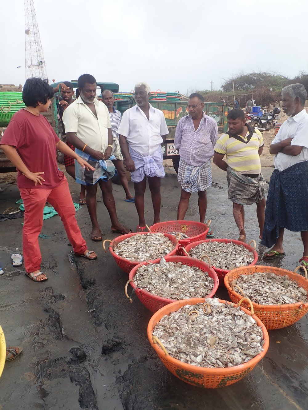 TV at Mandapam south - baskets of miscellany (bycatch) destined for chicken feed.jpg