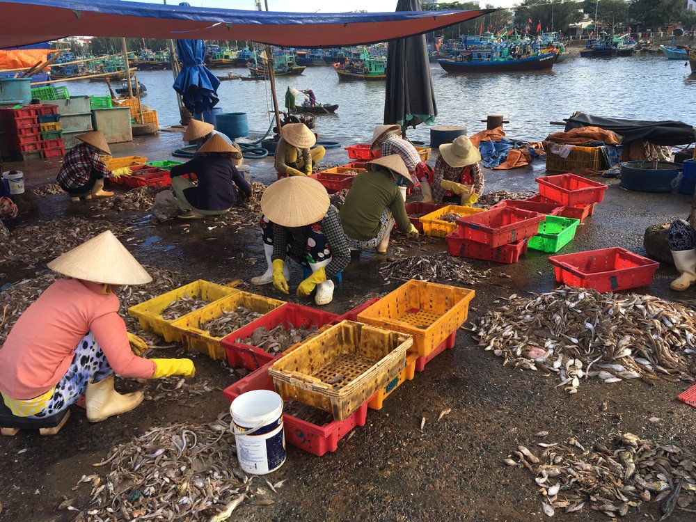 Baskets of bycatch- Fishers sorting through piles of marine life at a trawl landing site in Mui Ne, Binh Thuan Province.  Much of this marine life ends up at the local markets and some of it goes to fish sauce processing plants.