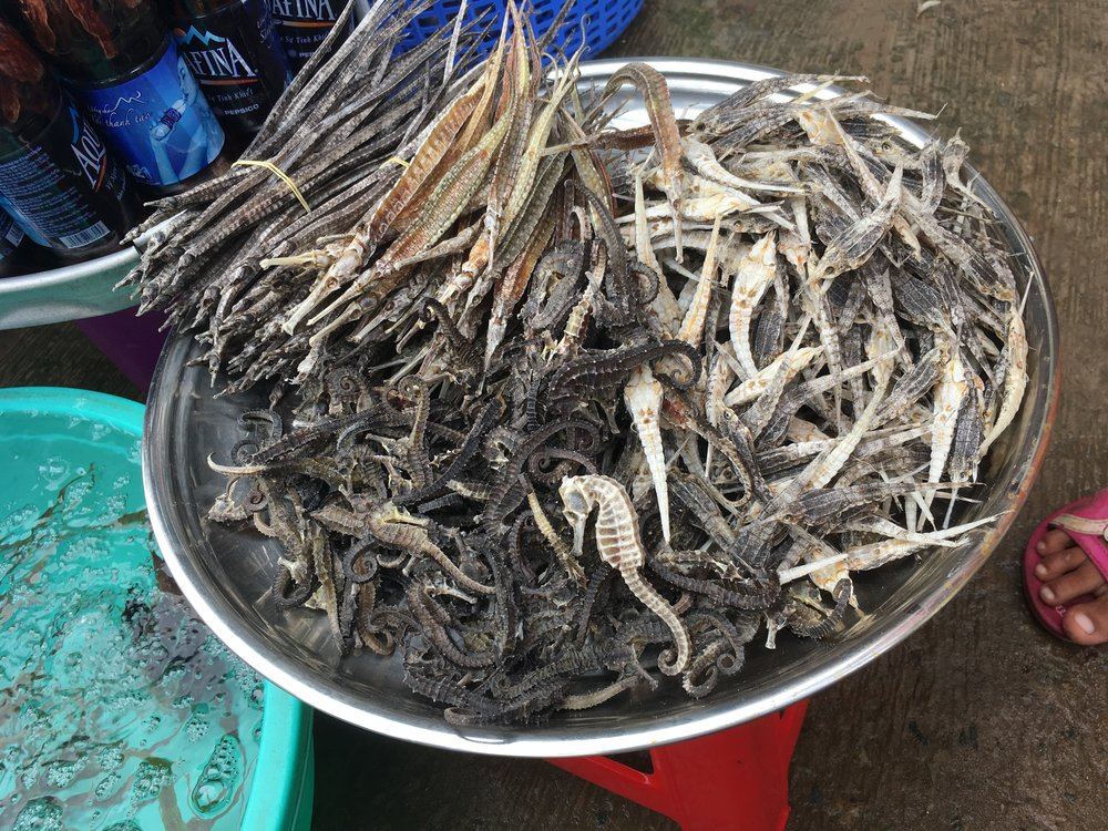 An assortment of dried seahorses and their relatives (from the family Syngnathidae, including pipefish and sea moths) ready to be sold at a local market or shops on Phu Quoc Island, Kien Giang Province.