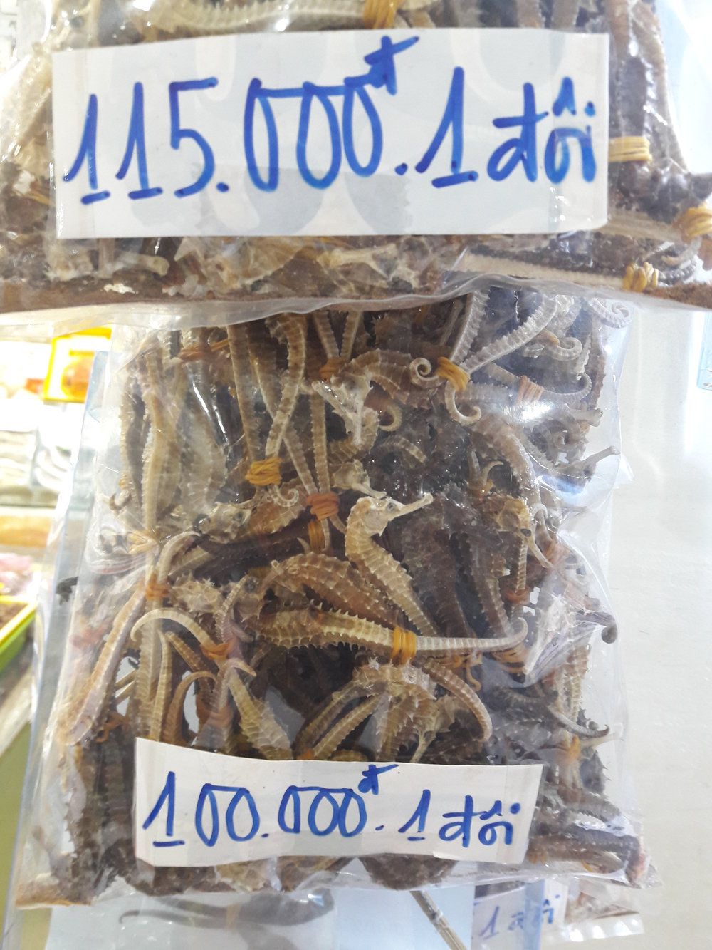 Bags of seahorses being sold at the market in Nha Trang, Khanh Hoa Province. Sold dry, a kilogram of seahorses will fetch over $1100 Canadian Dollars. The ones pictured here are being sold as pairs for $6, depending on size.  Photo by Do Huu Hoang.