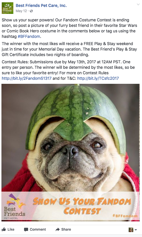 Melon Head- BF.jpg