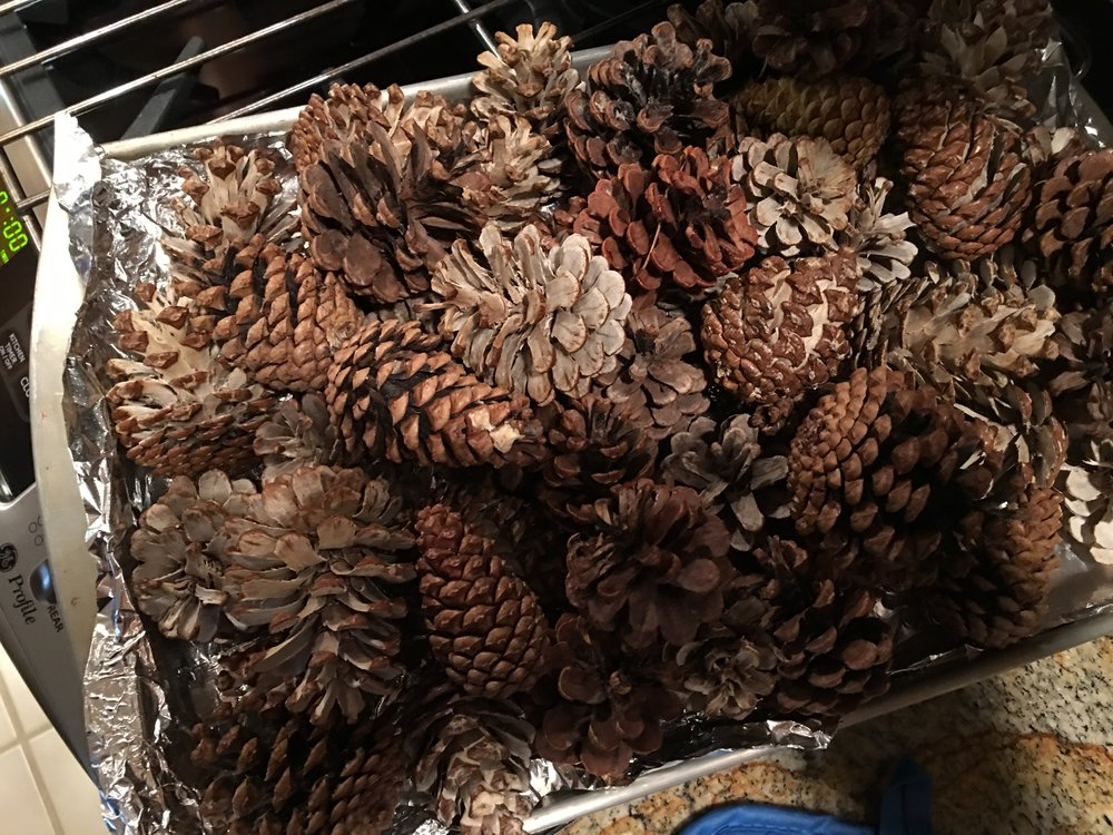 Bleached and non-bleached pinecones getting baked to kill any bugs or wiggles. ;)