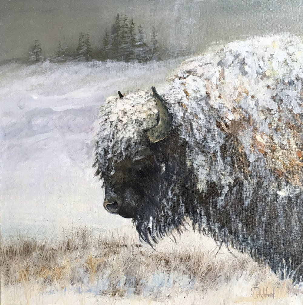 "Winter Bison - 16"" X 16"""