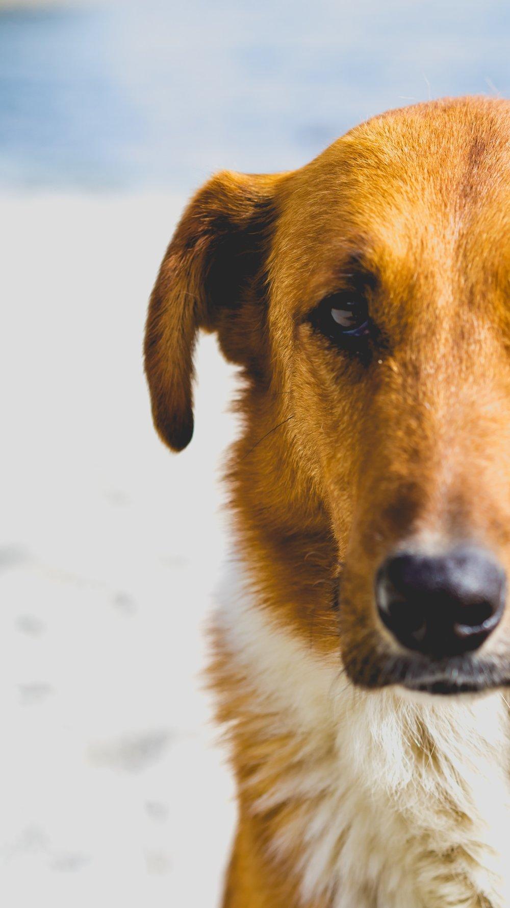 Dog's eyes.jpg