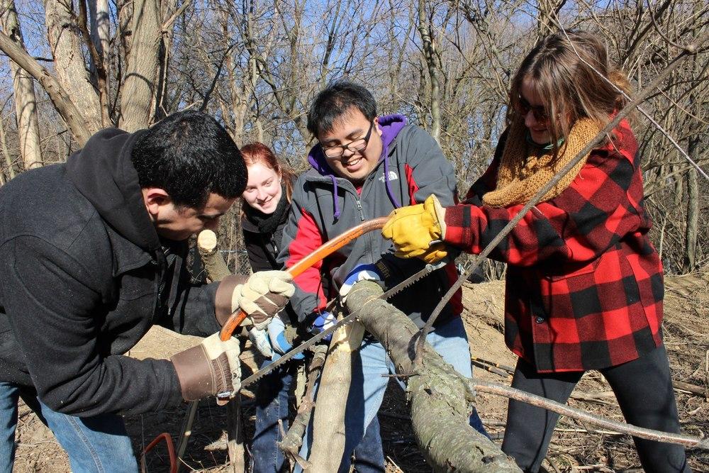 12. Cutting A Tree.jpg