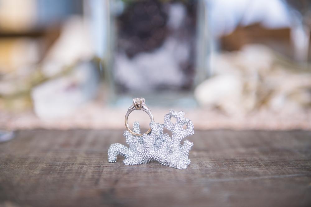 coastal wedding rings at south carolina aquarium, revolution wedding tours