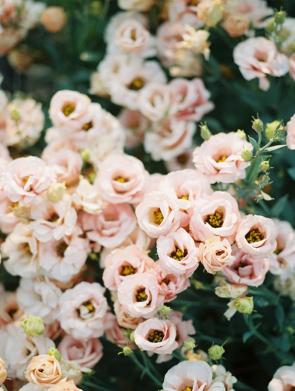 flowerfarm-6.JPG