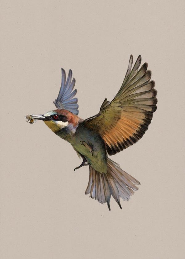Janja Baznik,  Migratory Birds Humanitarian Project