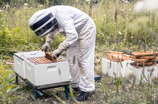 Dani Mart,  Bees Lab