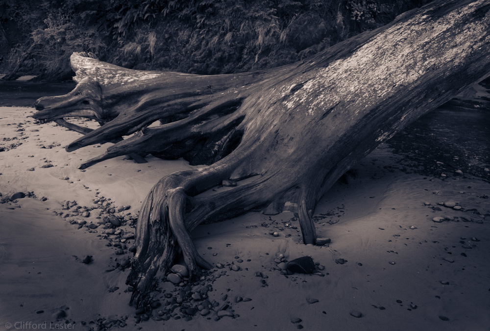 Tree Trunk, Timber Cove