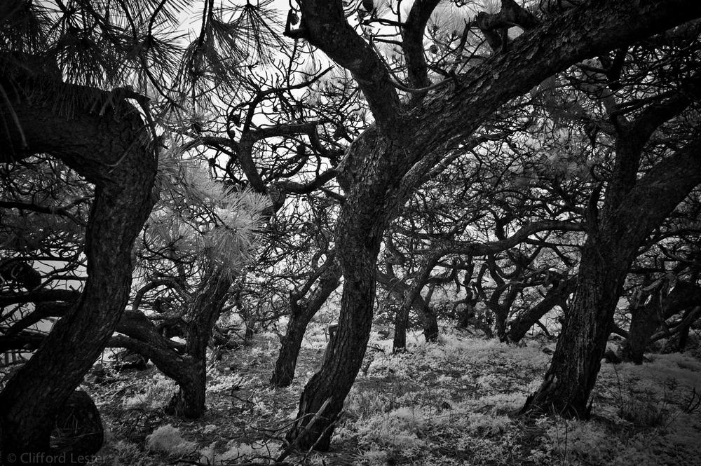 Torrey Pines I