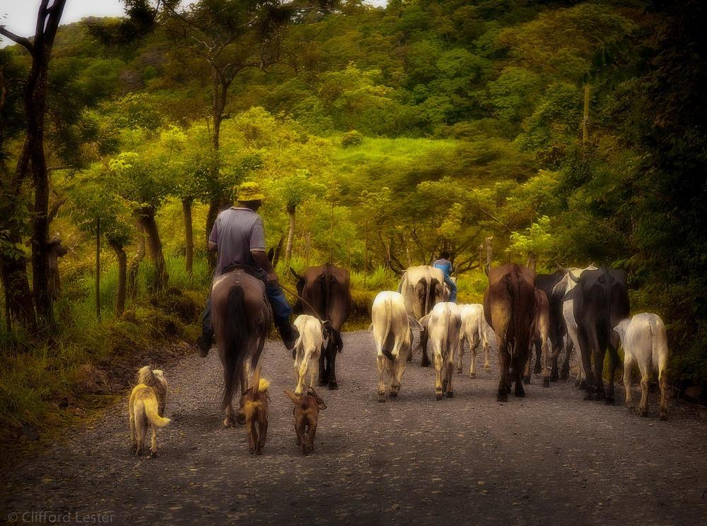 Monte Verde - Costa Rica