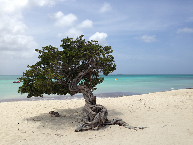 Eagle Beach Aruba. Photo credit Alexandre Breveglieri