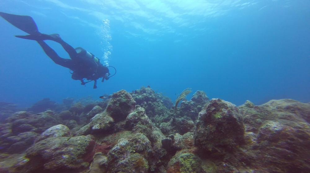 Diving-Saba