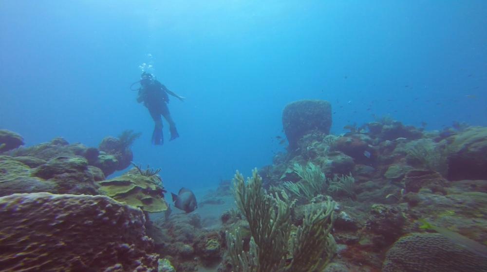 Albert diving!