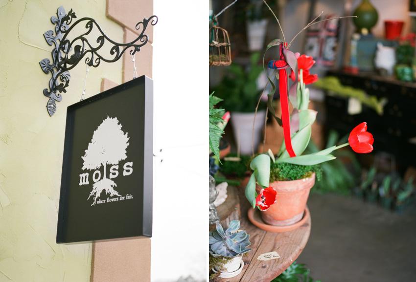 Moss.Flowers.Tyler.Texas