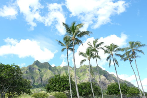 Support Local In Hawaii: An Unconventional Travel Guide To Oahu