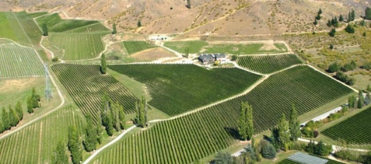 felton-road-vineyard-aerial-647x287.jpg