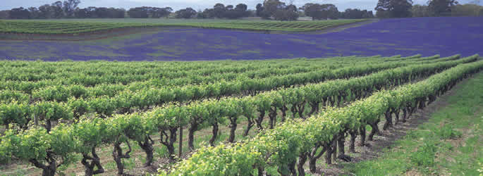 Clare Valley Wine Region, South Australia