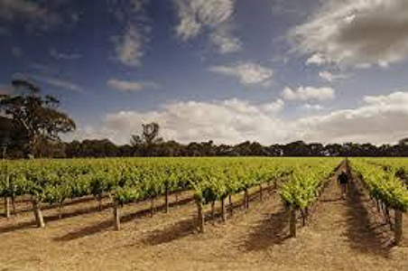 Langhorne Creek Wine Region, South Australia