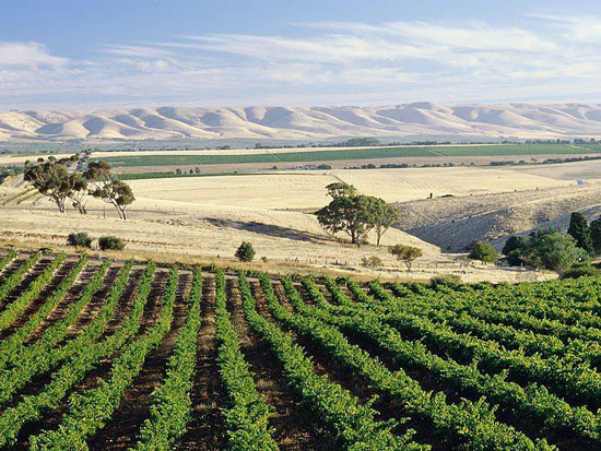 McLaren Vale Wine Region, South Australia