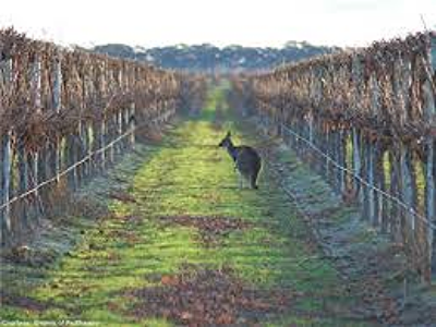Padthaway Wine Region, South Australia